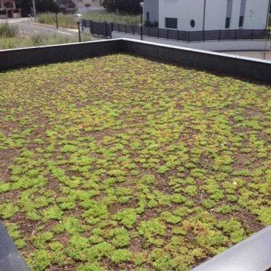 Zöldtető - EPDM gumi csapadékvíz szigetelő lemezzel